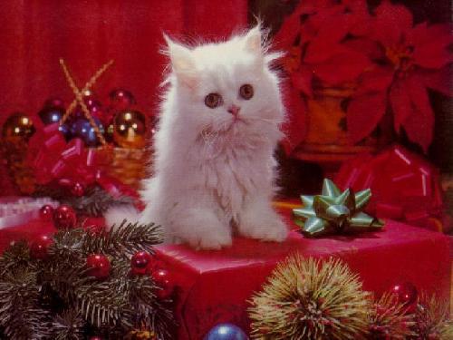 Immagini Auguri Di Natale Gratis.Biglietti E Cartoline Gratis Per Auguri Di Natale Becomegeek Com